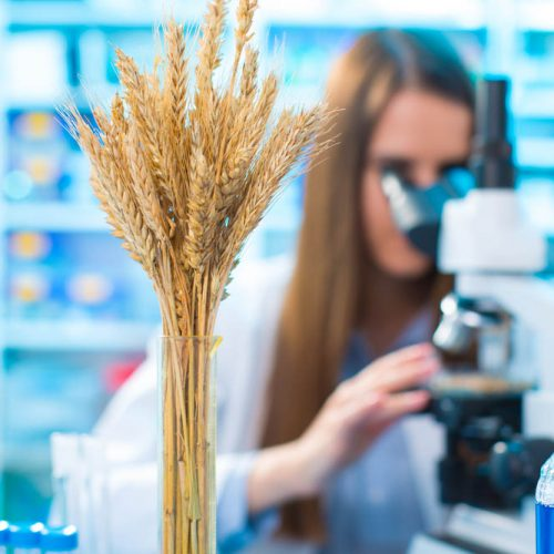 ceradis-home-wheat-laboratory