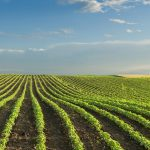 Ceradis receives US EPA approval for new biofungicide CeraMax, for soy seed treatment